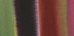 Rainbow Chard 4 - 4 x 4 - scan020