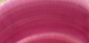 141774-watermelon radish 5 -22 x 22